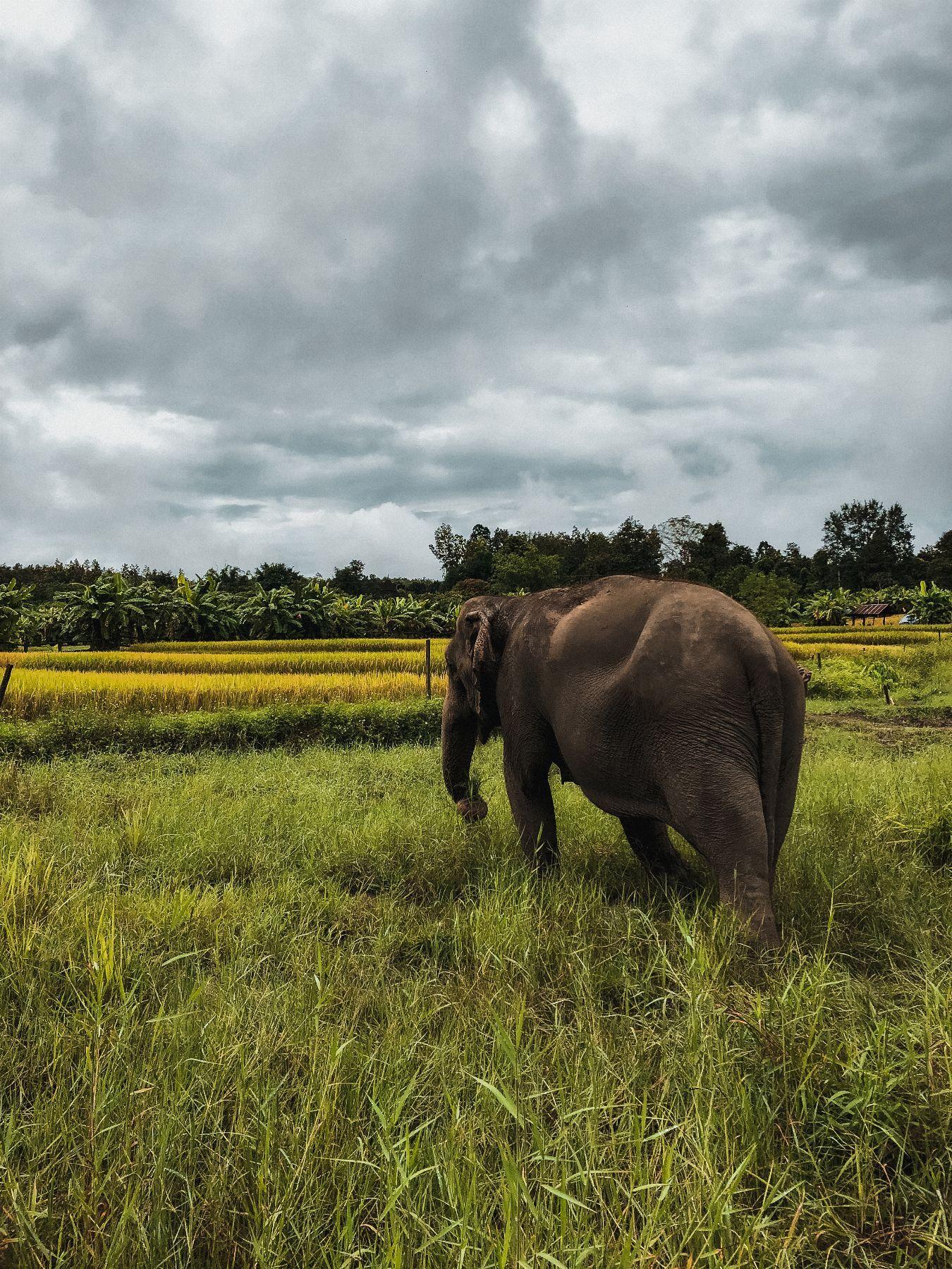 Lanna Kingdom Elephant Sanctuary